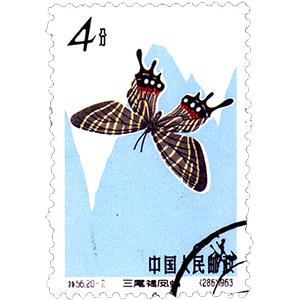 蝶(ちょう)
